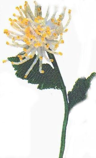 Бисероплетение цветы: хризантема.